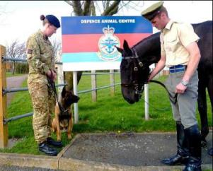 Defence Animal Centre - picture with horse